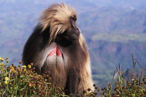 ethiopia-image-gallery-9