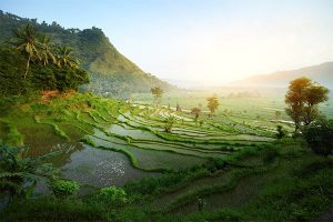 indonesia-image-gallery-1